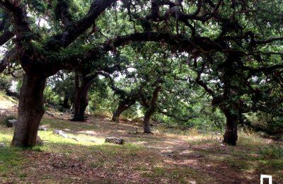 Walking route: Tsikalario – Amelathiu – Nimfiotisa – Kynidaros