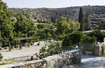 Ένα καφενείο, μικρός παράδεισος, δίπλα στο αρχαιότερο δέντρο του νησιού